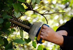 Tarifs entretien jardinage